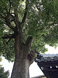 H27.4.27 神社の境内